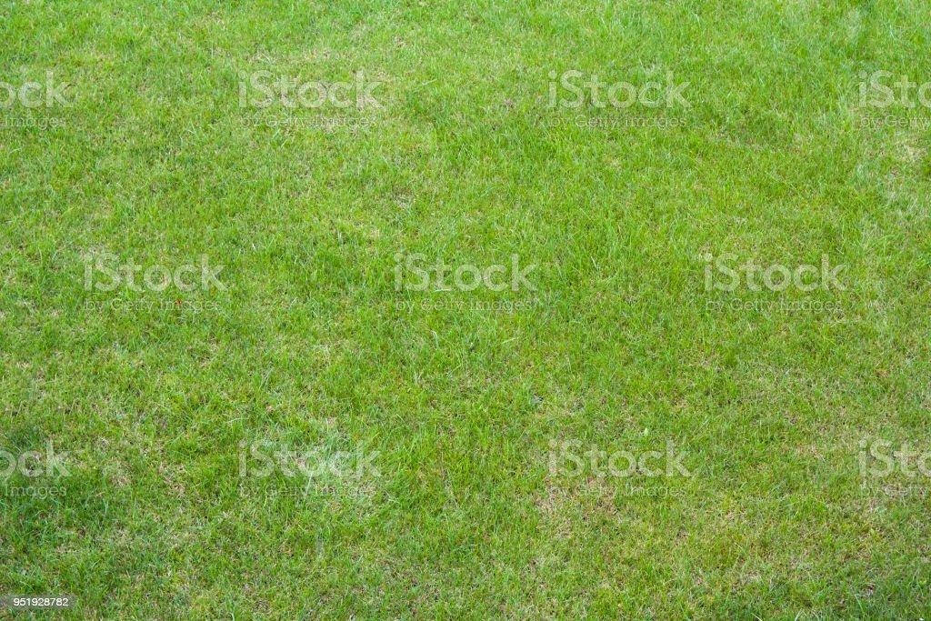 vClose up of clean fresh spring lavish bright green grass...
