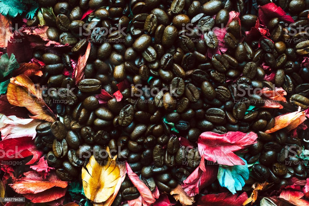 Close up of Coffee seed. stock photo