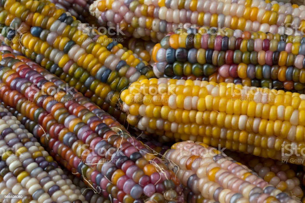 Close up of colorful gem glass corn on cob royalty-free stock photo