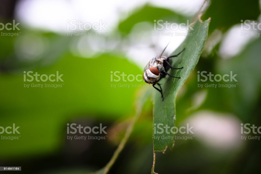 close up of common fly or housefly stock photo