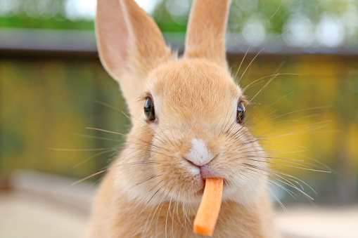 Close up of cute baby rabbit