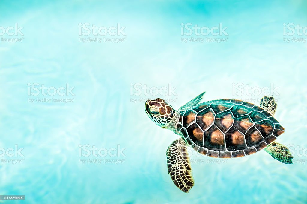 Close up of cute turtle stock photo