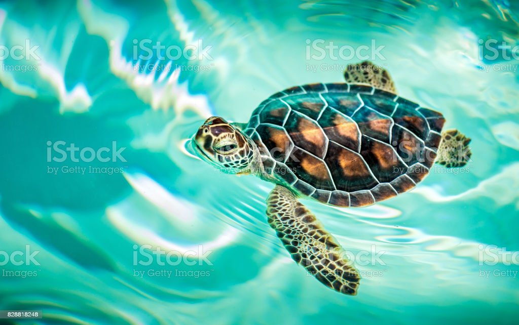 Close Up Of Cute Turtle Stock Photo Download Image Now Istock