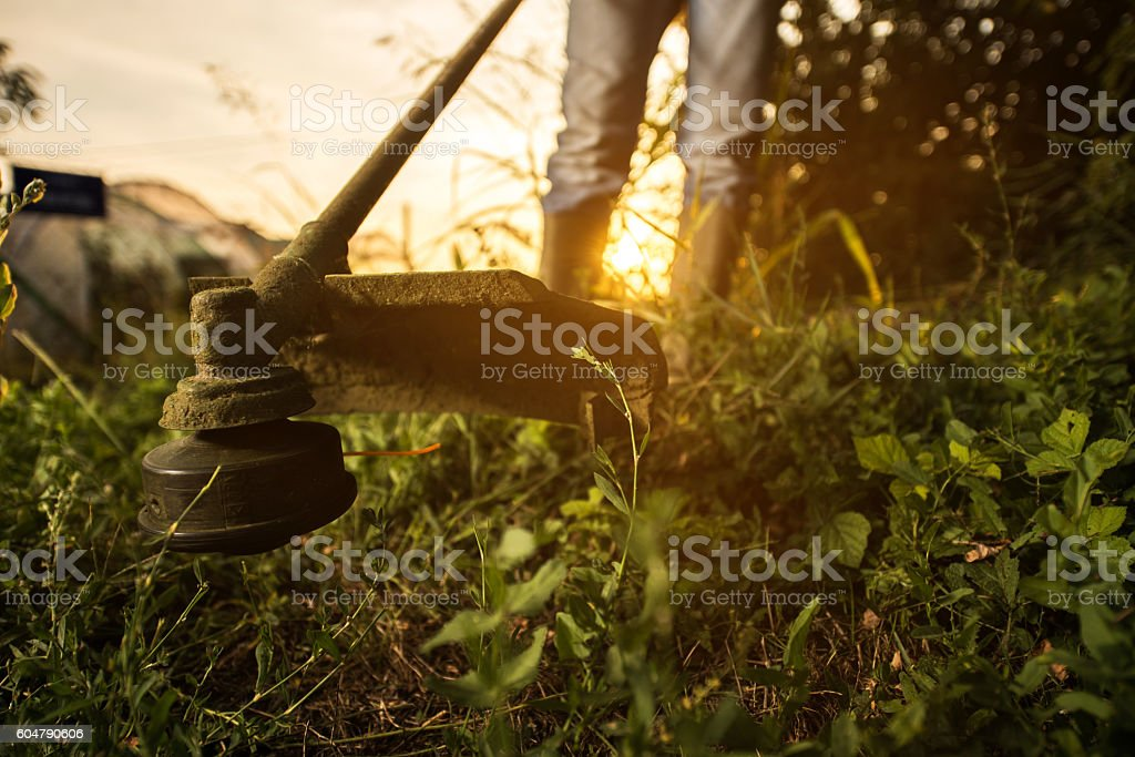 Close up of cutting grass with weed trimmer. stock photo