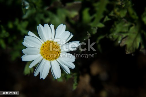 Close Up Of Daisy Stock Photo & More Pictures of 2015