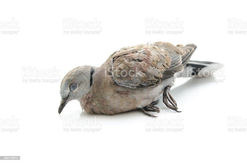 Close up of dead bird stock photo