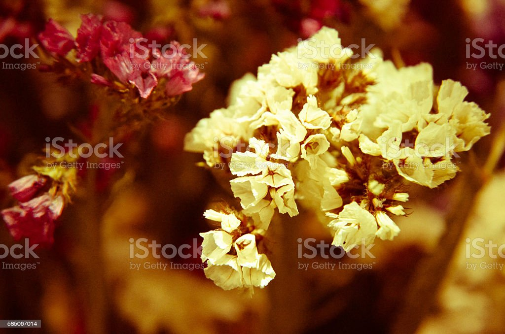 Close up of decorative and dry flowers stock photo