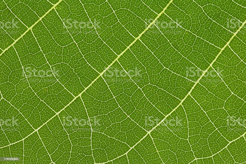 close up of delicate green leaf pattern royalty-free stock photo