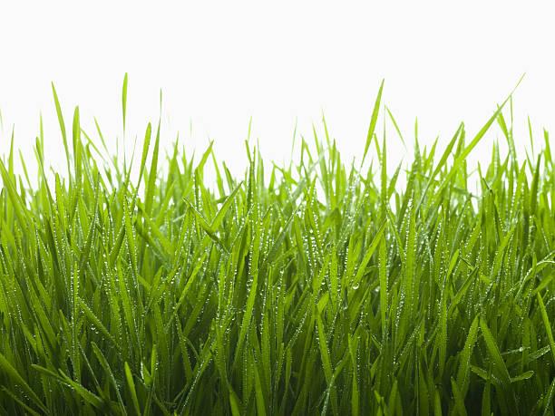 Primer plano de las gotas de rocío sobre la hierba - foto de stock