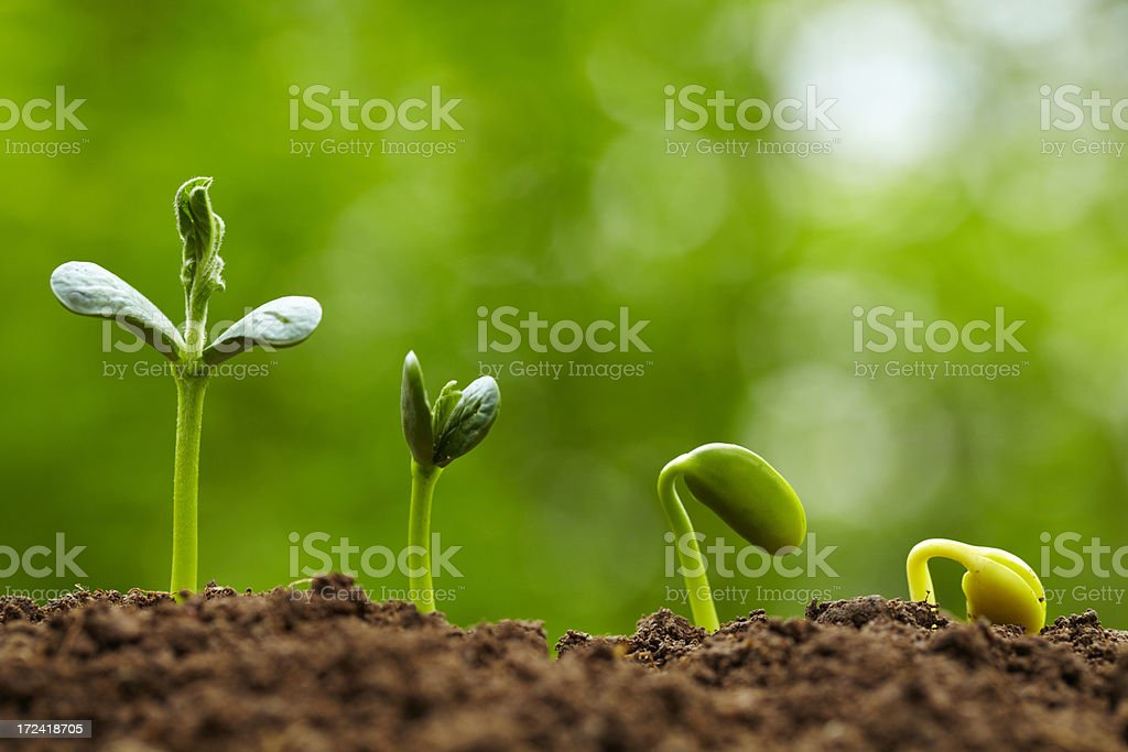 Close up of dirt with small sprouting green buds stock photo