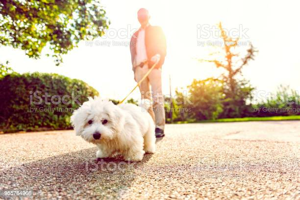 Close up of dog on leash looking at the camera picture id955764966?b=1&k=6&m=955764966&s=612x612&h=9gzpg2e3icch2dufllz7om0hu4gvf3tcvu bgbkilsi=
