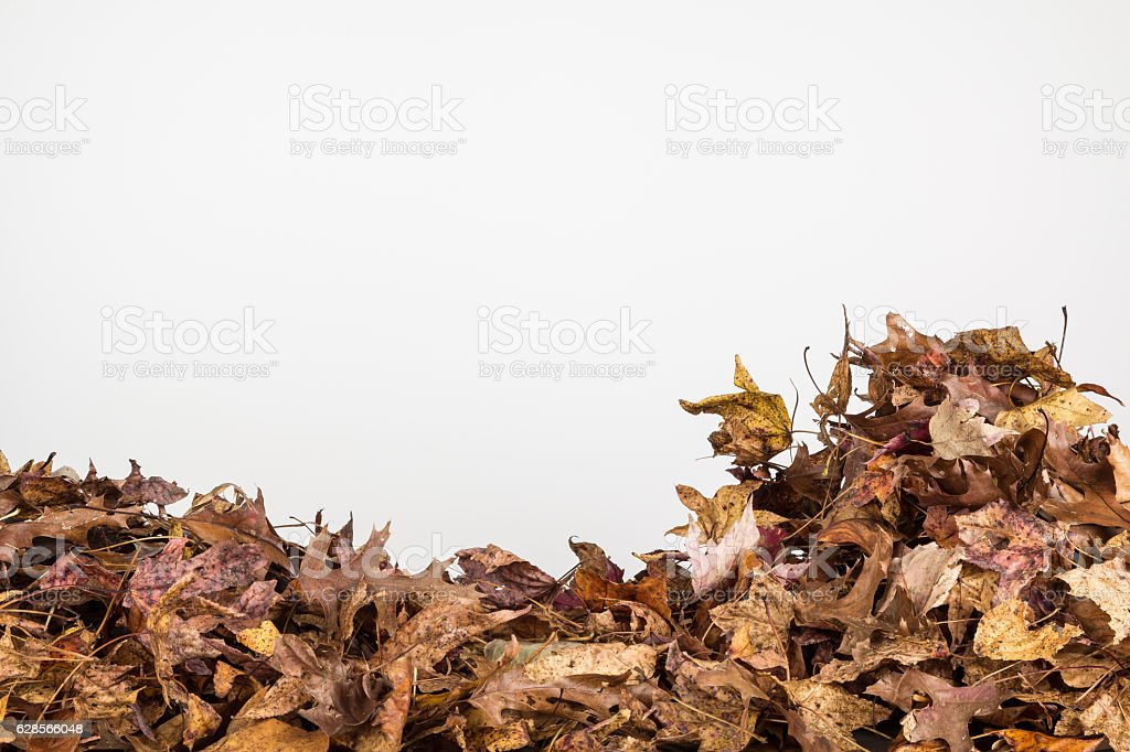 Close up of dried fall leaves stock photo