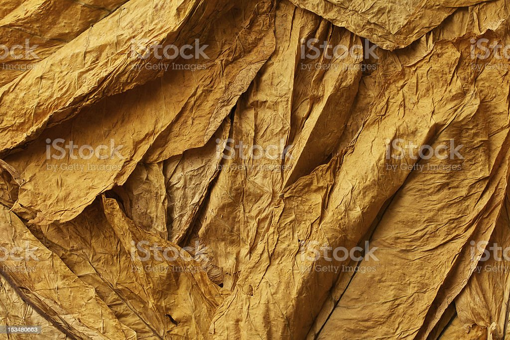 Close up of dried tobacco leaves stock photo