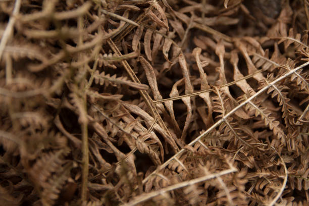 Close up of dry bracken stock photo