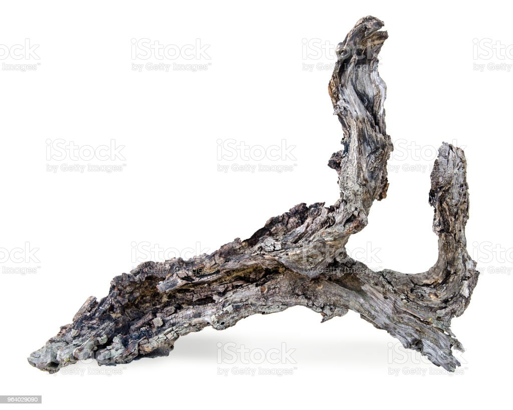close up of dry branch - Royalty-free Branch - Plant Part Stock Photo