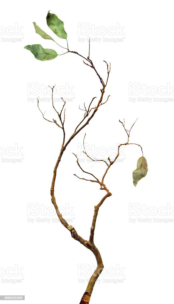 Close up of dry branch - Royalty-free Backgrounds Stock Photo