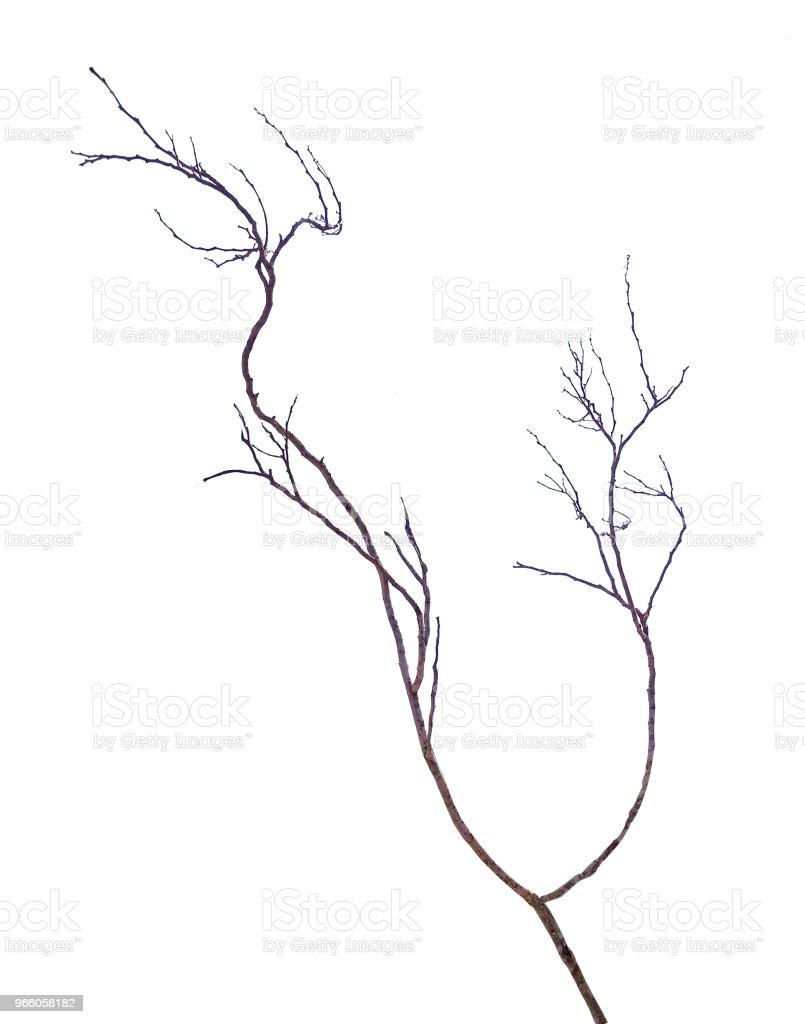 Närbild på torr gren - Royaltyfri Bildbakgrund Bildbanksbilder