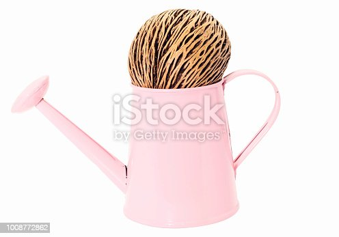 istock Close up of Dry Cerbera oddloam's seed on little pink watering cans 1008772862