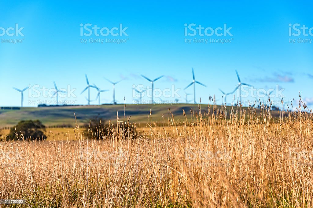 Close up of dry grass with blurred windmill electricity turbines stock photo