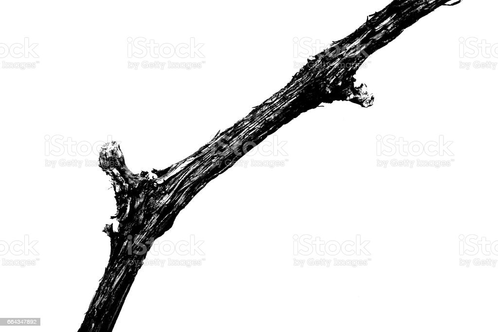 Close up of dry vine in black and white stock photo