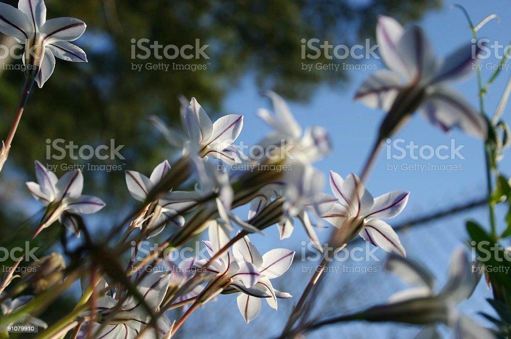 Close Up of Early Spring Flowers stock photo