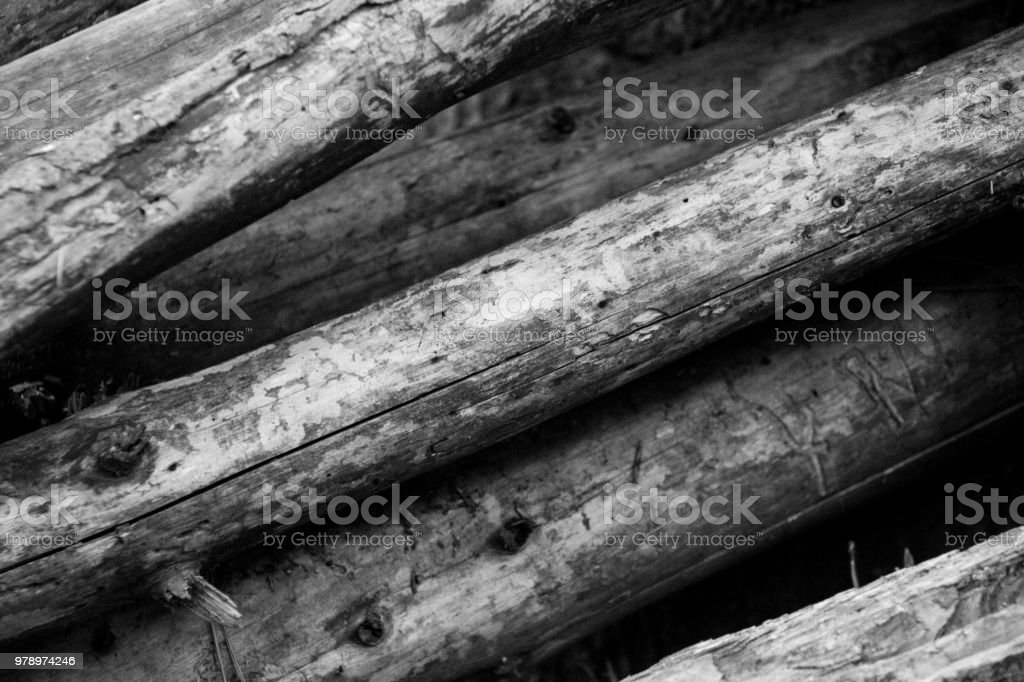 Close up of fallen branches stripped of bark stock photo