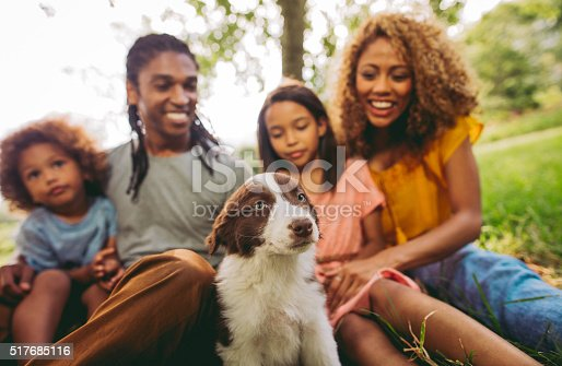 istock Close up of family enjoying new adorable fluffy border collie 517685116