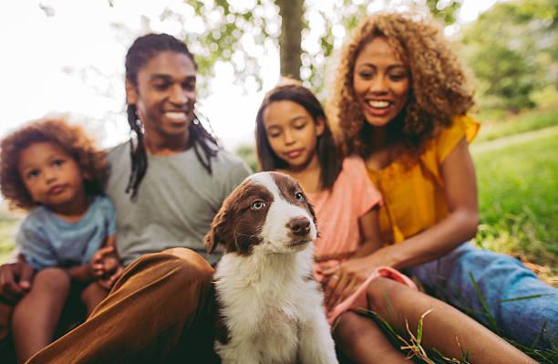 nahaufnahme der familie genießen neue süße flauschige border-collie - kinder picknick spiele stock-fotos und bilder