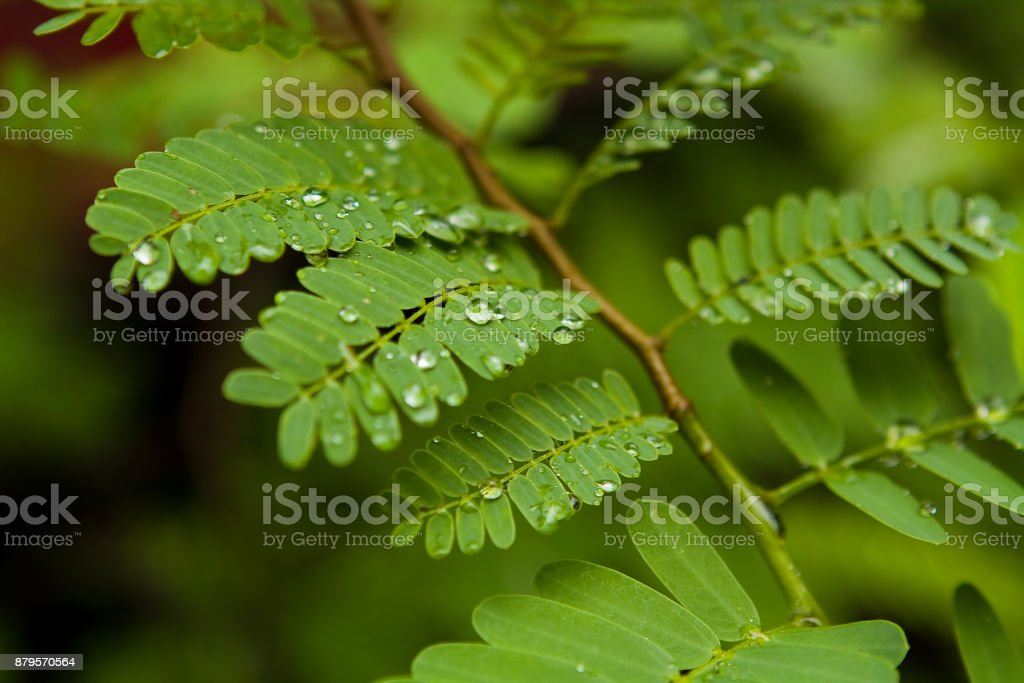 Close up of Fern Plant stock photo