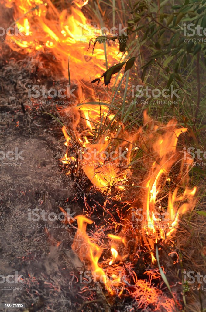 Close up of flames moving through forest undegrowth stock photo