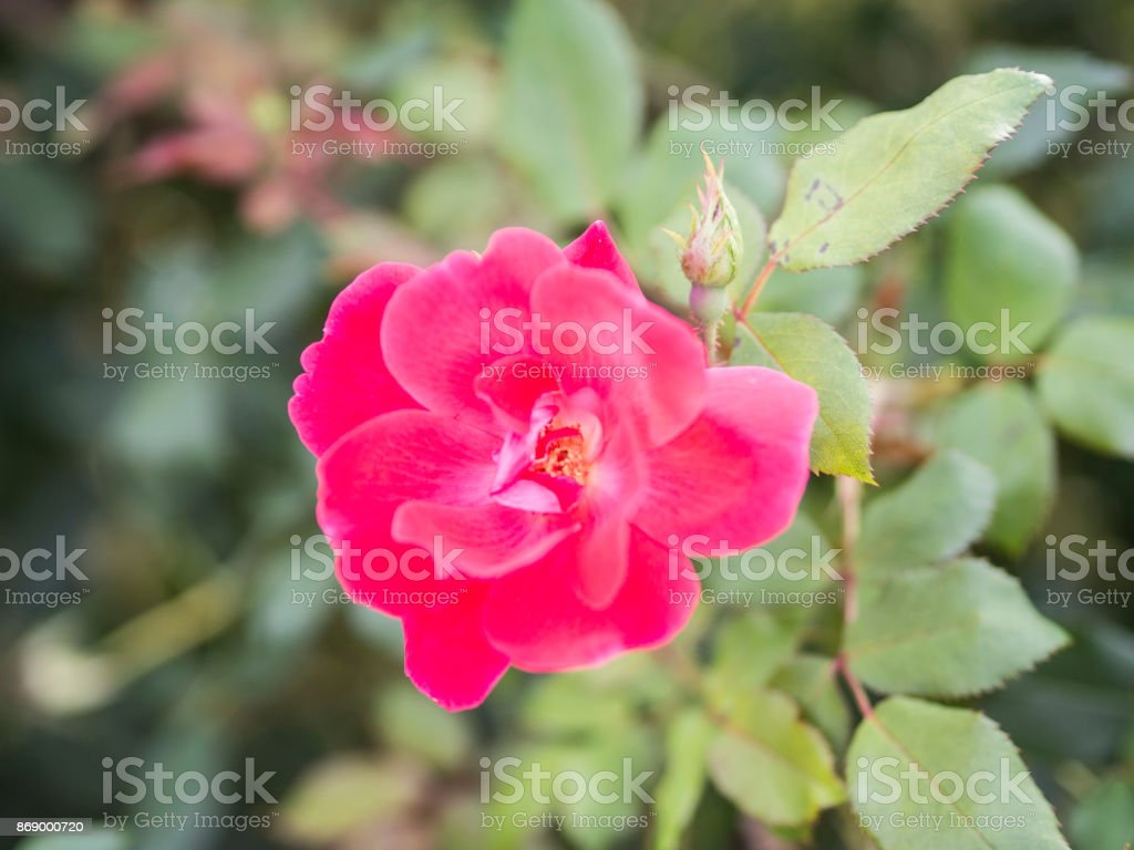 Close up of Flower stock photo