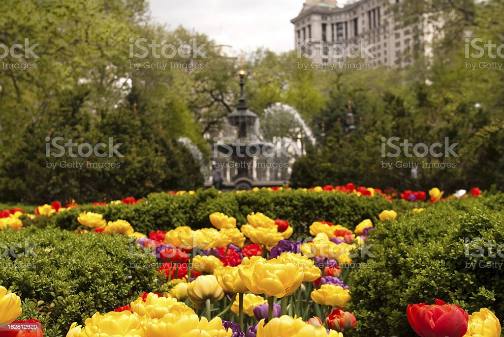 Close up of flowers at City Hall Park in Manhattan stock photo