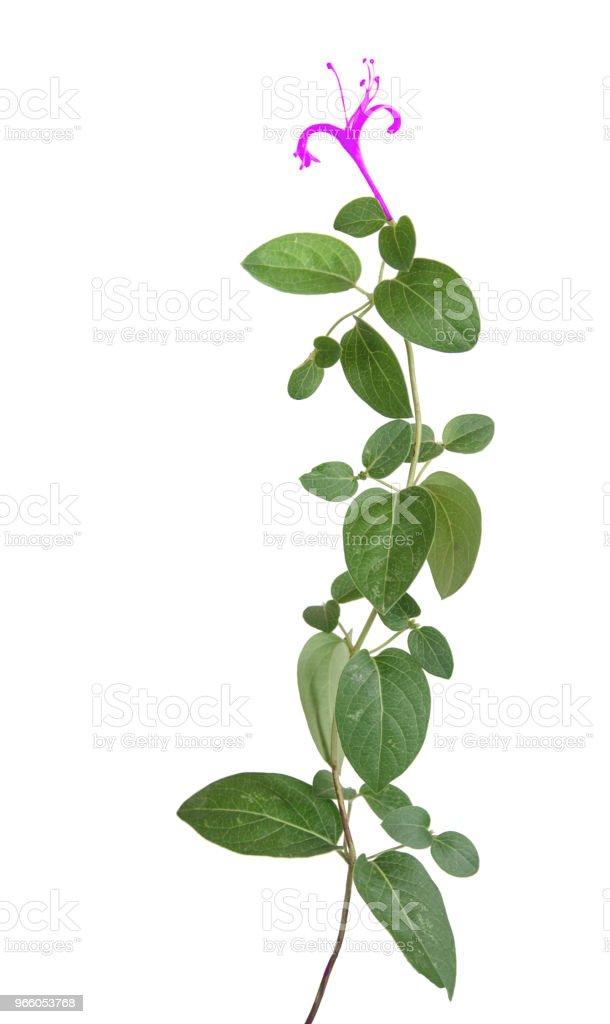 Närbild av blommor - Royaltyfri Bildbakgrund Bildbanksbilder