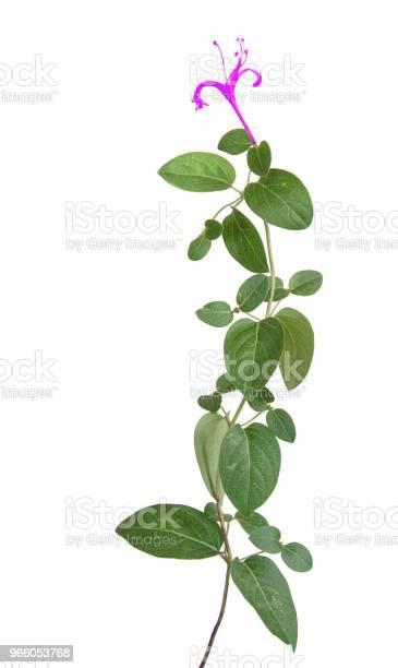 Närbild Av Blommor-foton och fler bilder på Bildbakgrund