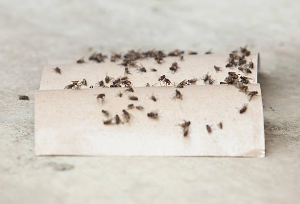 nahaufnahme von fly trap - mottenfalle stock-fotos und bilder