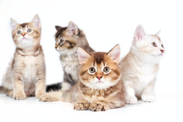 Close up of four kittens picture id1197608988?b=1&k=6&m=1197608988&s=612x612&w=0&h=1kbp2jbyeeg3yxeaj39k7hrrsxqg08jj n3s0crctro=
