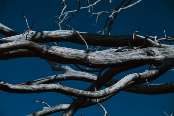 Close up of Fractal Dead Tree Branches stock photo