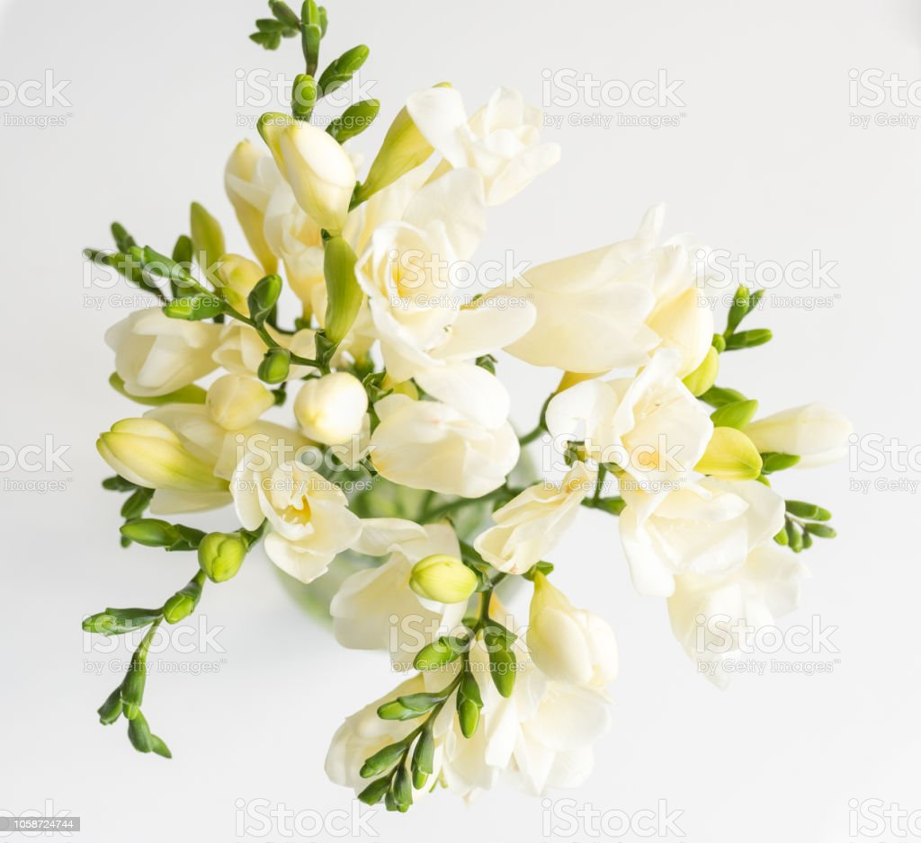 Close up of freesias in vase over white background from above стоковое фото