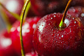 Close up of fresh cherry berries with water drops. Red background.