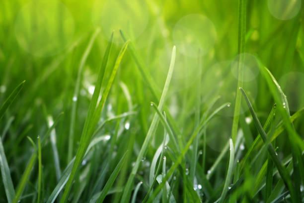Cerca de la hierba fresca con gotas de agua temprano en la mañana - foto de stock