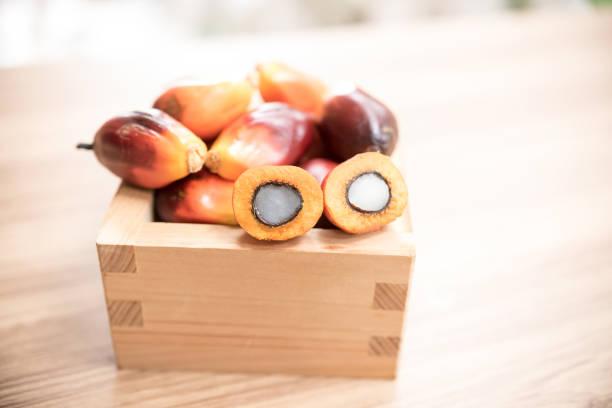 close up of fresh oil palm fruits - palm oil bottles imagens e fotografias de stock