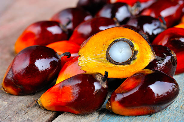 Close up of fresh oil palm fruits, selective focus. Palm oil, a well-balanced healthy edible oil is now an important energy source for mankind. It comes from the fruit itself (reddish orange). Today it is widely acknowledged as a versatile and nutritious vegetable oil, trans fat free with a rich content of vitamins and antioxidants. palm oil stock pictures, royalty-free photos & images