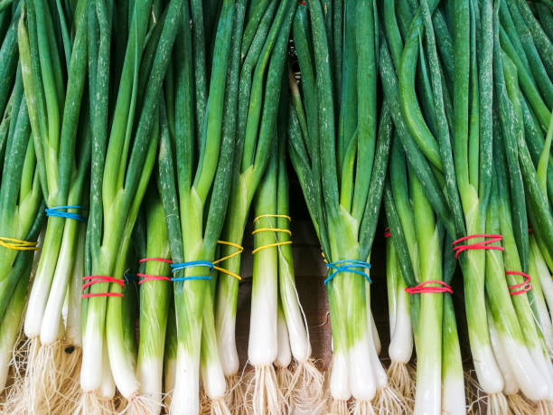 Close up of fresh spring onions in a row Color image depicting fresh spring onions in a row, on display on a stall and for sale at the food market. The onions are tied together with multi colored elastic bands. Room for copy space. leek stock pictures, royalty-free photos & images