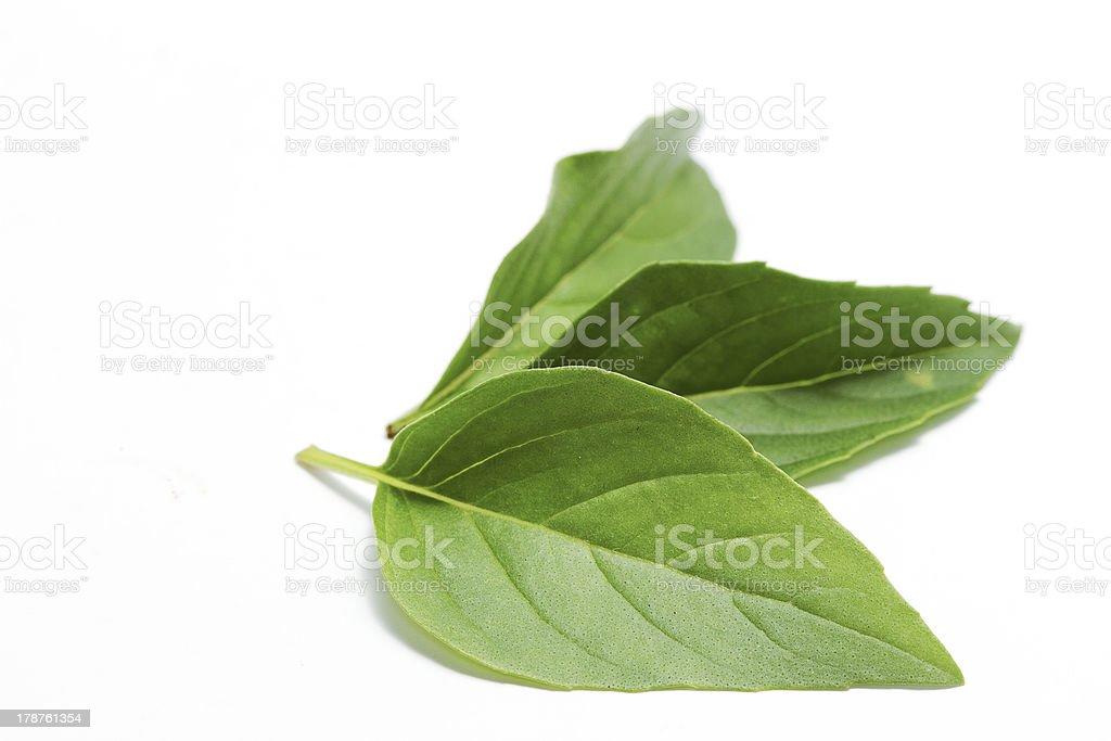 Close up of fresh sweet basil on white background stock photo