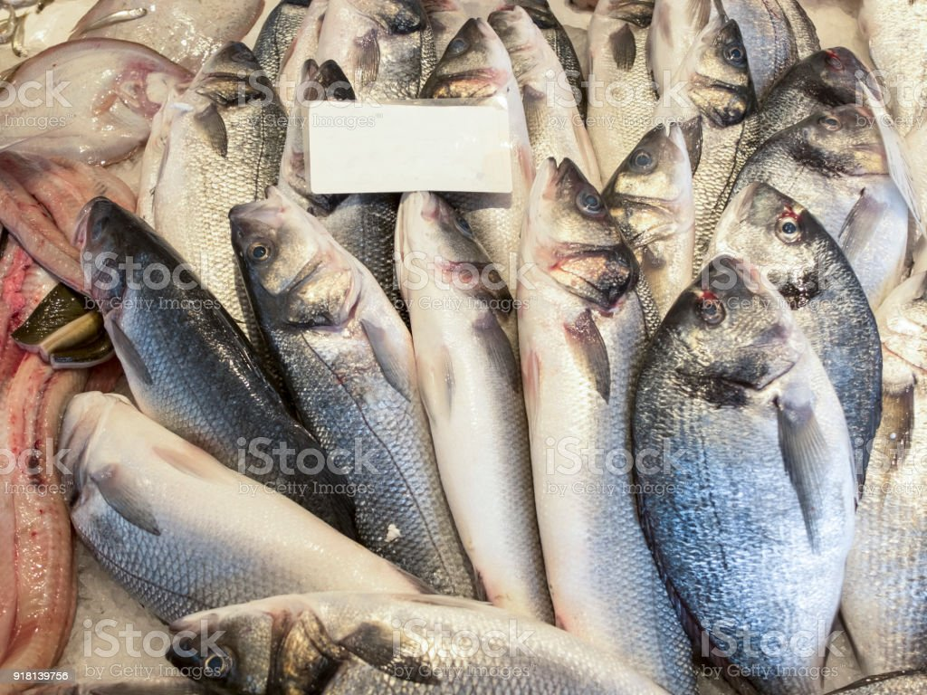 Close up of freshly caught fresh fish. The fish of different species is spread in overlapping rows with the heads pointing upwards. stock photo
