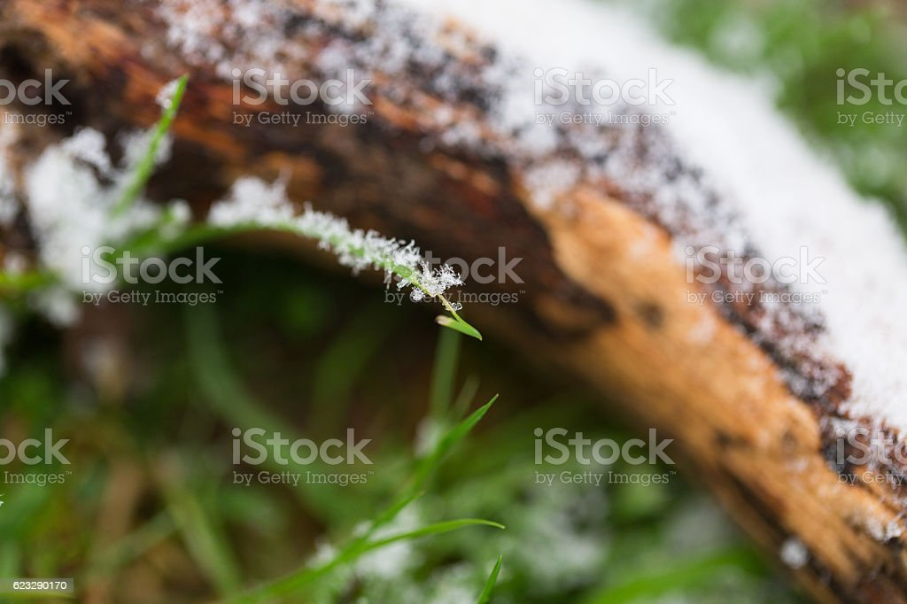 Close up of frost covered piece of wood stock photo