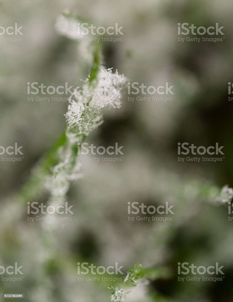 Close up of frost on grass stock photo