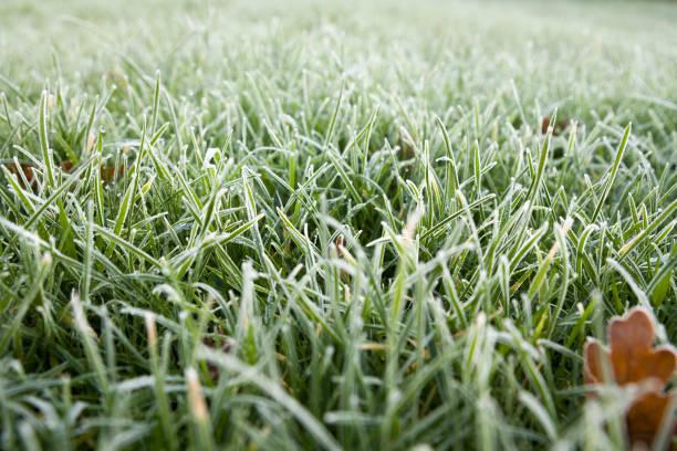 Close up of frozen blades of grass on a garden lawn.