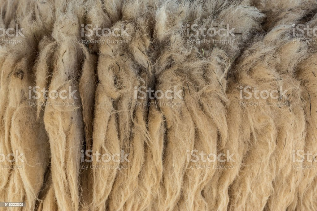 Close up of fur goat texture background stock photo