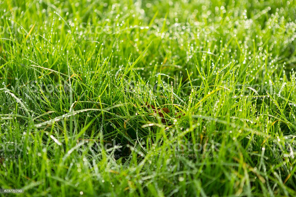 Close up of glistening dew covered grass stock photo